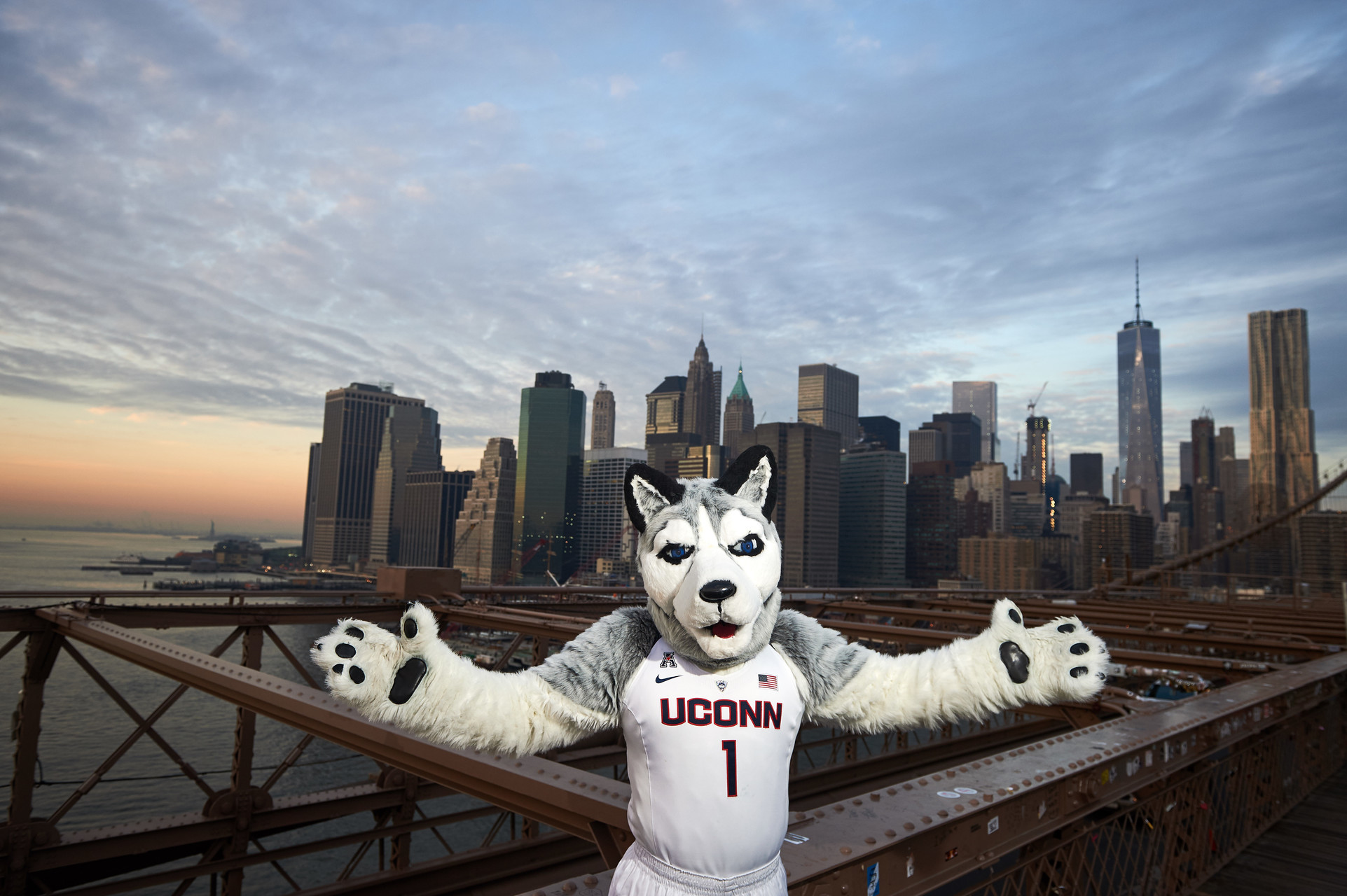 Husky in NYC